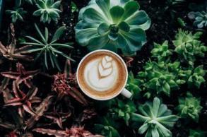 coffee-in-plants_373x_2x